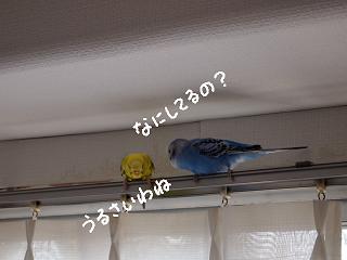 aki8-2.jpg
