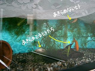 akirame-2.jpg