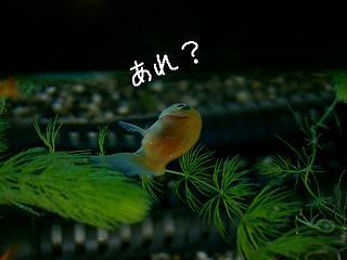 are-2.jpg