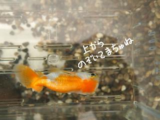 baku6-2.jpg