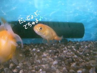 chidaijyobu-2.jpg