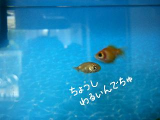 chousiwarui-2.jpg