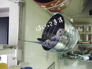 cupin-2.jpg