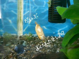 daibu-2.jpg