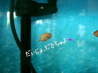 daijyobu-2.jpg