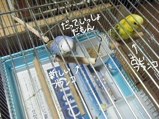 datteissho-3.jpg
