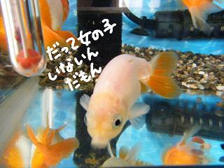 datteonnanoko-3.jpg