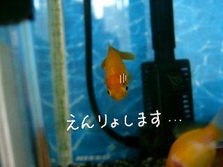enryo-2.jpg