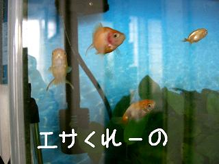esakure-no3.jpg