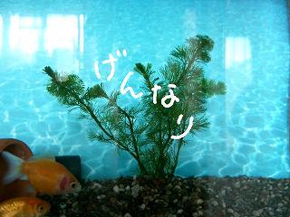 gennari-2.jpg