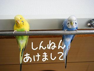 goaisatu1-2.jpg