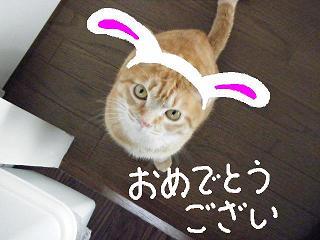 goaisatu4-3.jpg