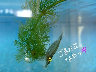 gomakasuna2.jpg