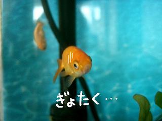 gyotaku-2.jpg