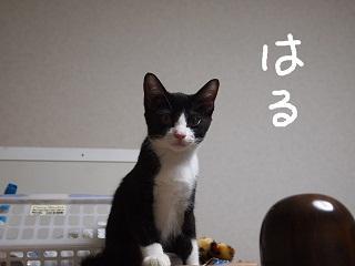 haru-2.jpg