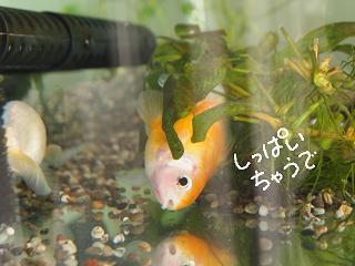 haru3-3.jpg