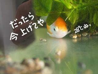 haru5-2.jpg