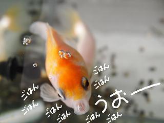 haru7-2.jpg