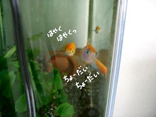hayakucho-dai-2.jpg
