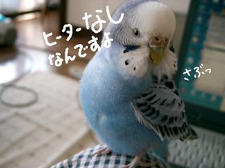 hi-ta-nasi-2.jpg