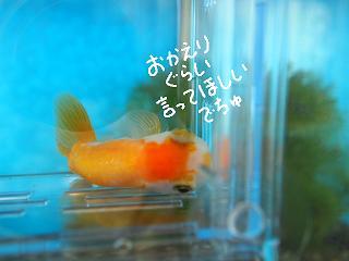 honsuiso-13-2.jpg