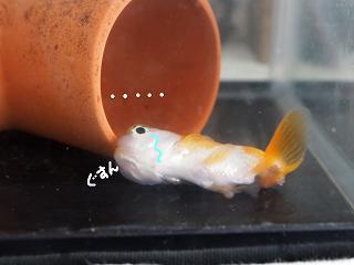 honsuiso-2-2.jpg