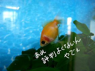 hyouban-2.jpg