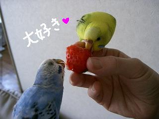 ichigo2-2.jpg