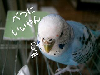 ichigo6-3.jpg