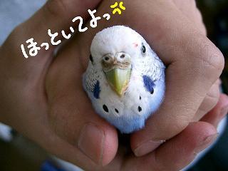 ichigo7-2.jpg
