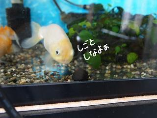 isimaki4-3.jpg