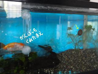 isimaki8-2.jpg