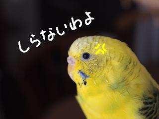isimakigo7-2.jpg
