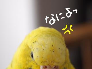 isimakigo9-2.jpg