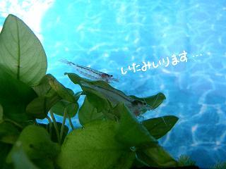 itamiiru2.jpg