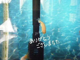 jyakoarigato-2.jpg
