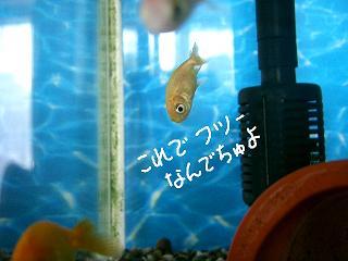 jyakofutu-2.jpg