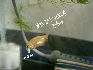 jyakogusun-2.jpg