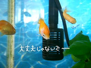 jyakokuu-3.jpg