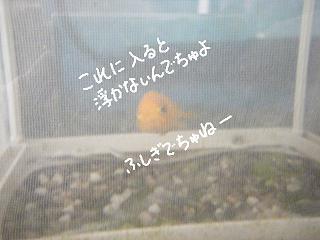 jyakonet5-2.jpg