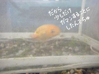 jyakonet6-2.jpg