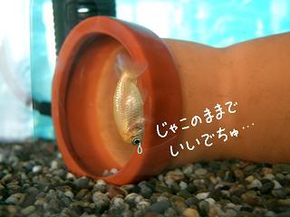 jyakonomama-2.jpg