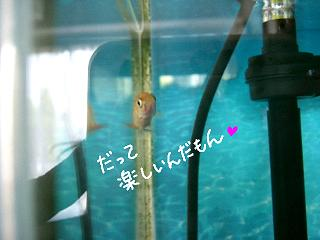 jyakotanosii-2.jpg