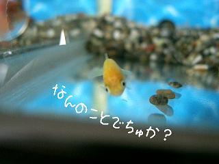 jyakotoboke-2.jpg