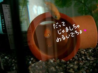 jyamawarui-2.jpg
