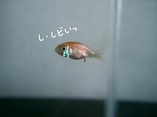 jyu-chan2.jpg