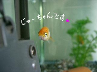jyu-desu-2.jpg