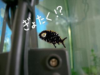 jyu-gyotaku-2.jpg