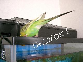 jyunbiok-2.jpg
