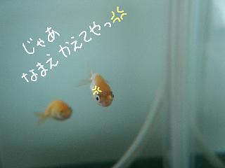 kaeteya5.jpg
